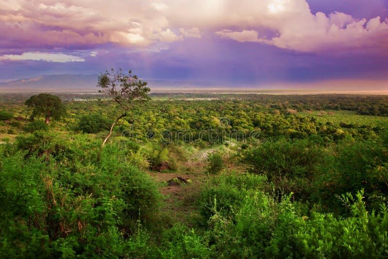 Download Bush In Tanzania, Africa Landscape Stock Image - Image: 28557305