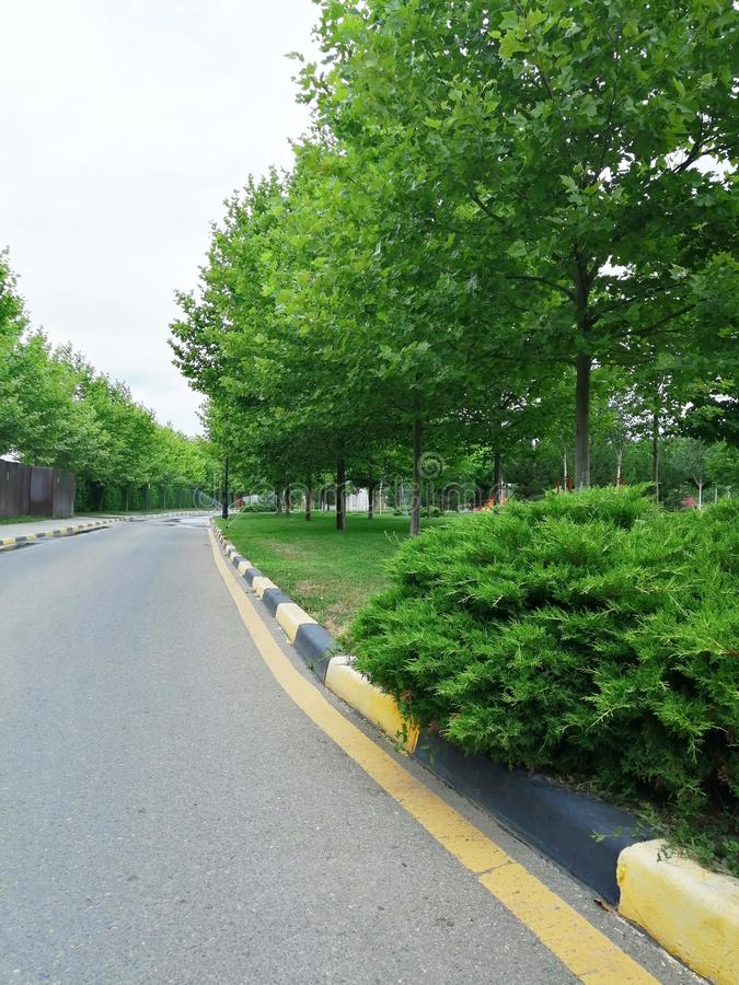 Bush, trees and road markings stock images