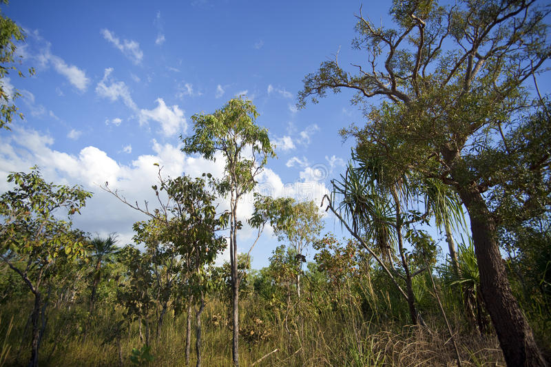 Bush tropical friega la vegetación, Territorio del Norte foto de archivo