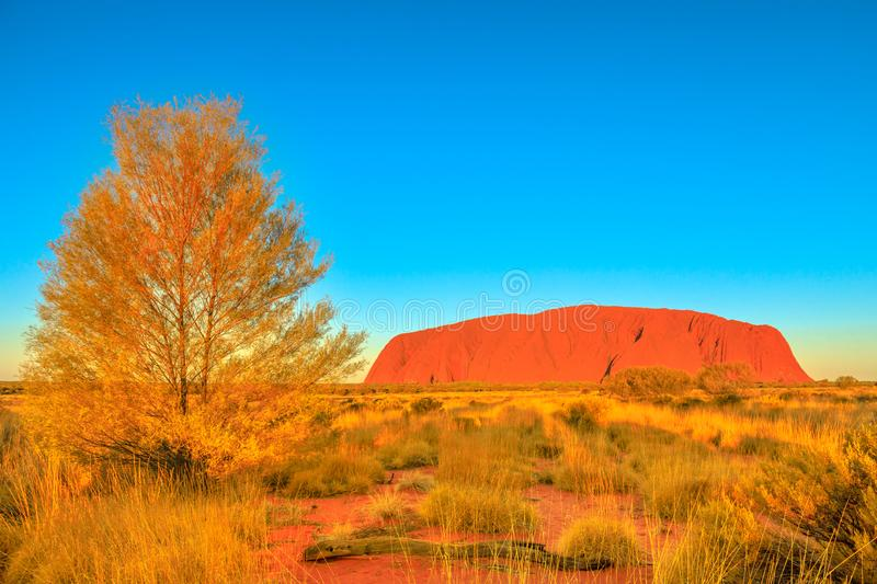 Uluru Ayers Rock. The bush vegetation of Australian outback in dry season with iconic red sandstone monolith at sunset called Uluru or Ayers Rock in Uluru - Kata royalty free stock photography