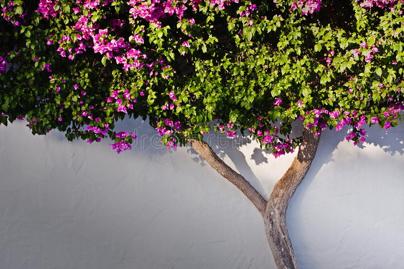 Bush on the wall. In the sunset time stock image
