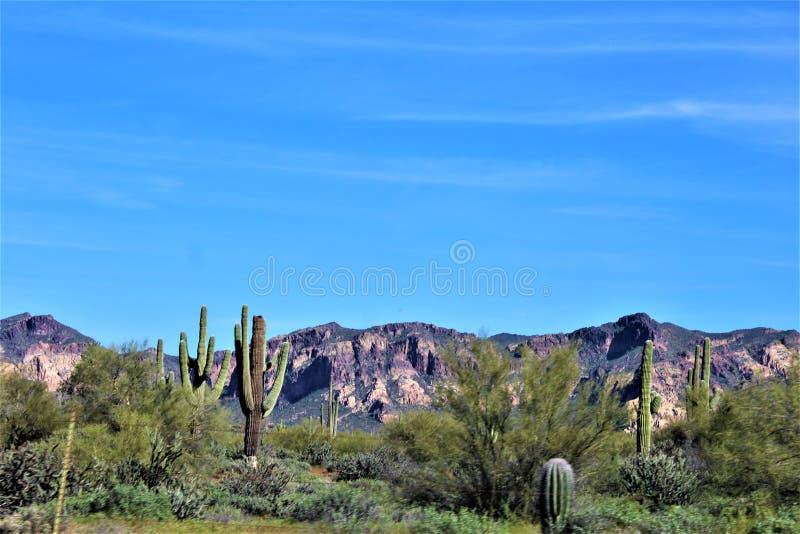Bush-Weg, het Nationale Bos van Tonto, Maricopa-Provincie, Arizona, Verenigde Staten royalty-vrije stock foto's