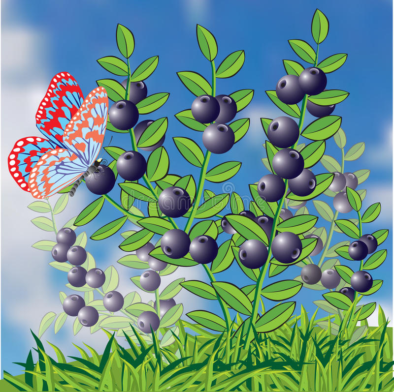 Bush of whortleberry and butterfly. stock illustration