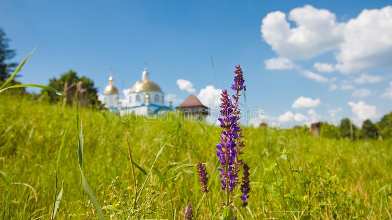 Deep blue flowers with ancient kozak tower and modern russian orthodox church blurred in background, well-known tourist attraction stock image