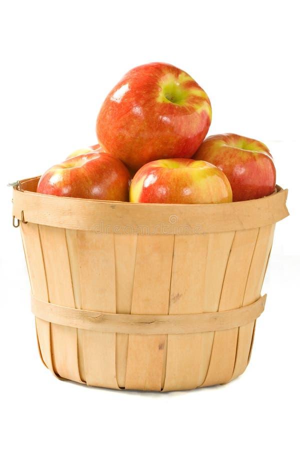 Bushel of Apples. Crisp fall apples in a small wooden bushel royalty free stock images