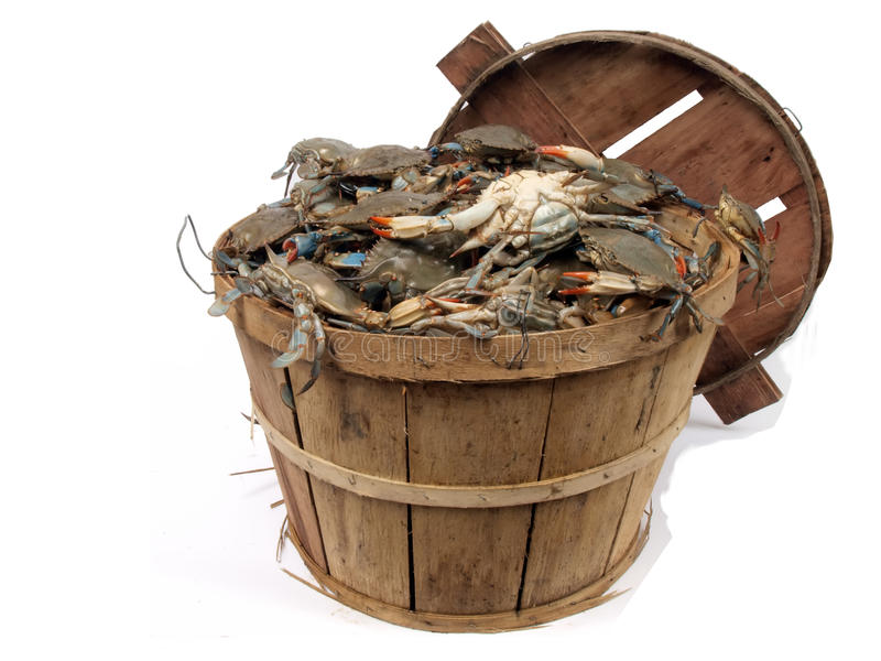 Bushel basket of crabs 3. Isolated on a white background photo of a bushel basket of live blue crabs from the Chesapeake Bay of Maryland stock photo