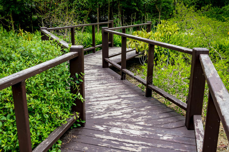 bushes река отражения парка footbridge стоковое изображение rf