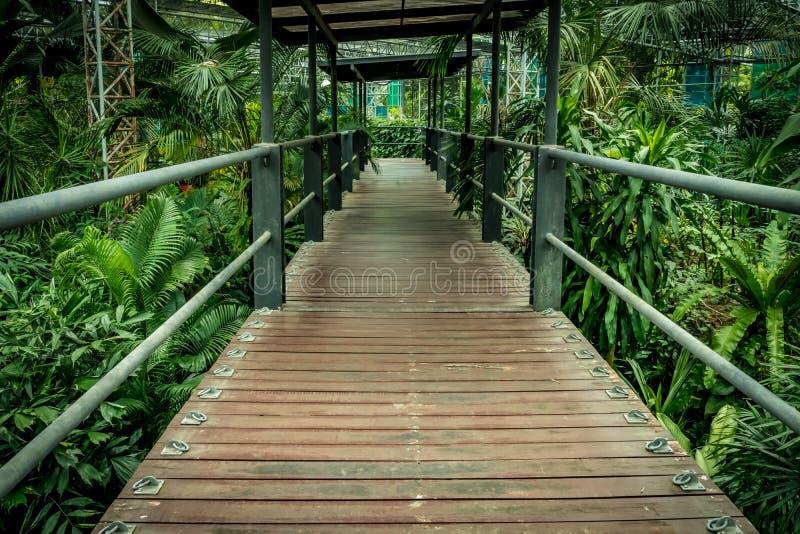 bushes река отражения парка footbridge стоковая фотография rf