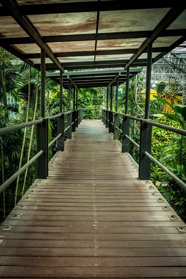 bushes река отражения парка footbridge стоковая фотография