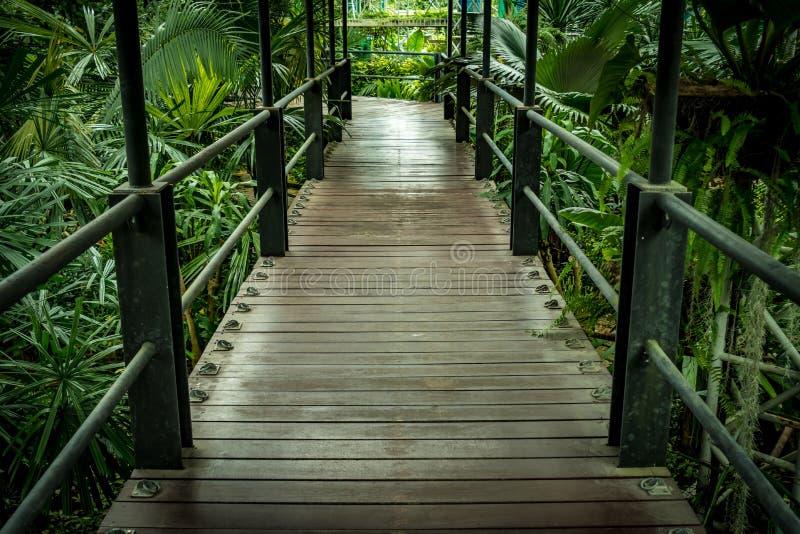 bushes река отражения парка footbridge стоковые фотографии rf