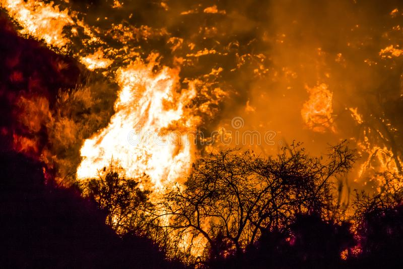 Bushes in Black Silhouette in Foreground with Bright Orange Flames in Background during California Fires. Bushes in black foreground with bright orange flames royalty free stock photo