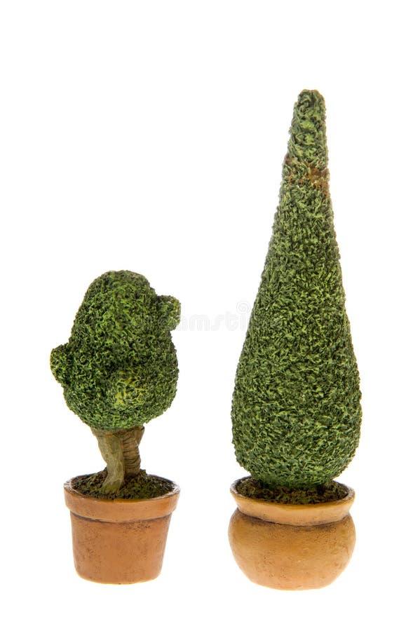 bushes buxus стоковая фотография