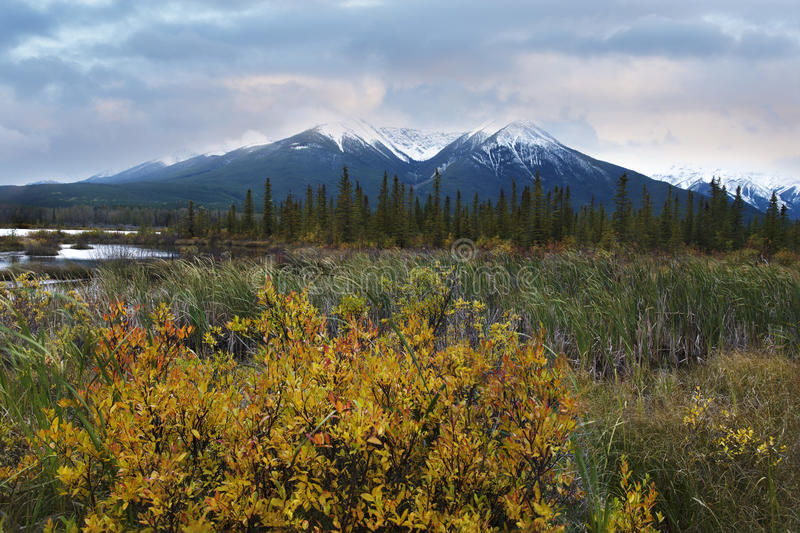 Download Bushes And Fresh Snow Near Vermilion Lake Stock Image - Image: 34289417