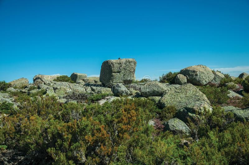 Bushes in front of rocky terrain on highlands stock photos