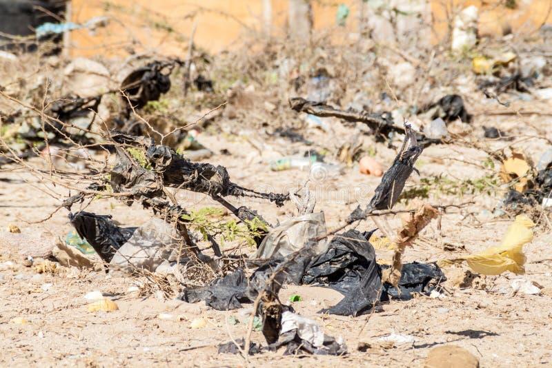 Bushes full of garbage. On La Guajira peninsula, Colombia stock images