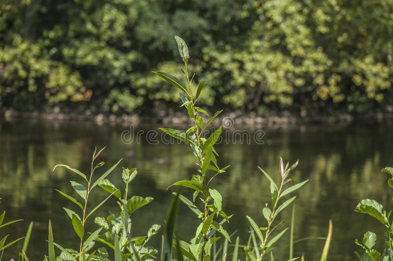Bushes and the lake, Kew Garden. royalty free stock image