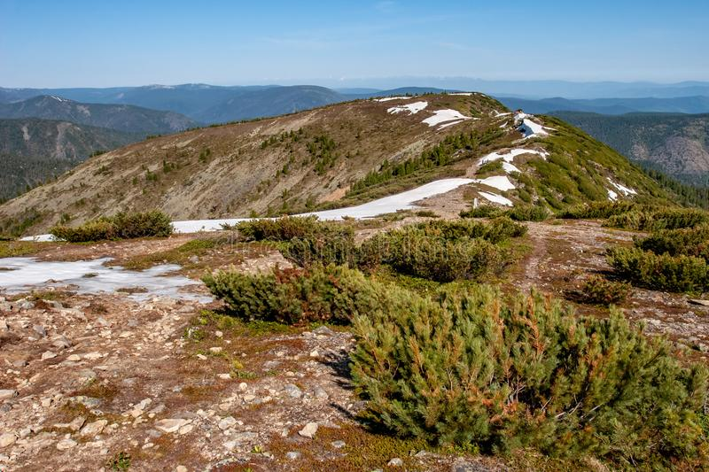 Bushes of low juniper growing on the ridge of the mountain. In some places there is snow. Around the mountains stock photos