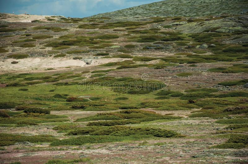 Bushes and rocks covered by moss and lichen on highlands. Bushes and rocks covered by moss and lichen over grassy fields on highlands, in a cloudy day at the royalty free stock photography