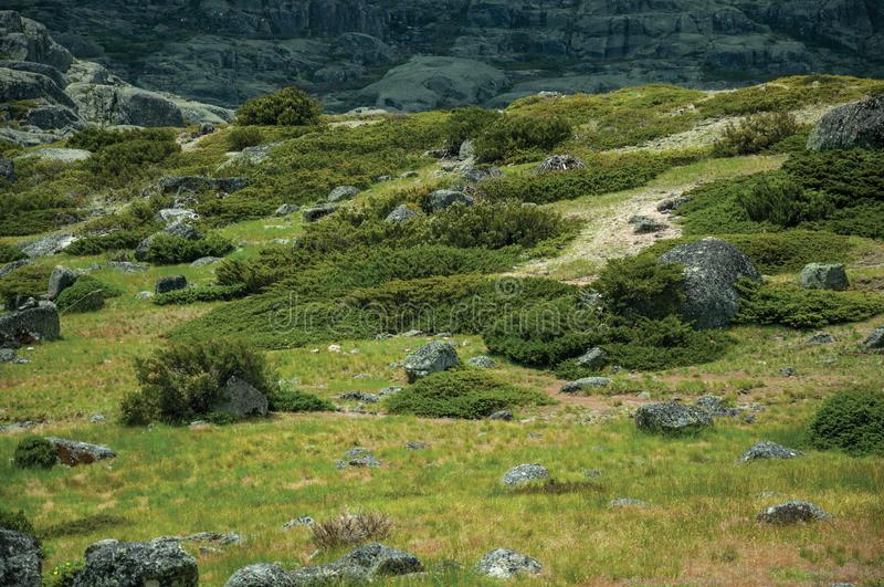 Bushes among rocky terrain on highlands royalty free stock photography