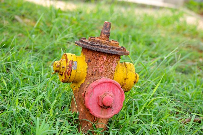 A rusty fire faucet. Between the bushes, the rusty fire faucets have been abandoned for a long time royalty free stock images