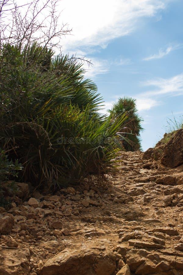 Bushes by the sea in Riserva Naturale dello Zingaro, Sicily, Italy stock photos