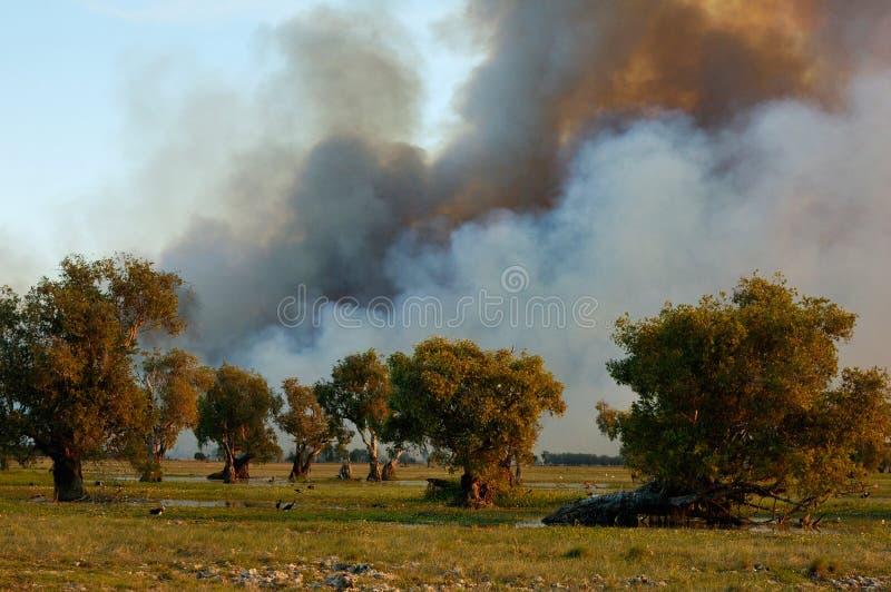 Bushfire fotografía de archivo