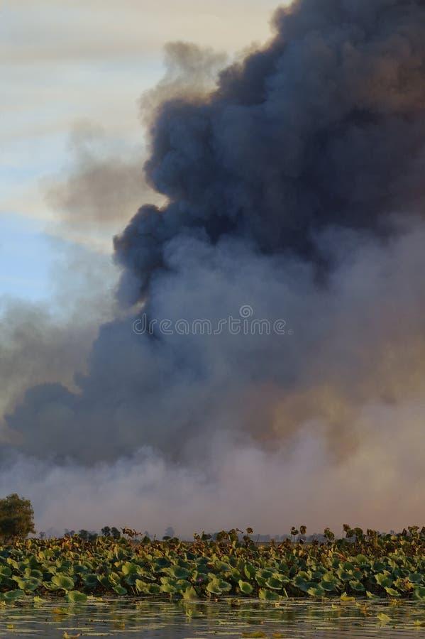 Bushfire foto de archivo