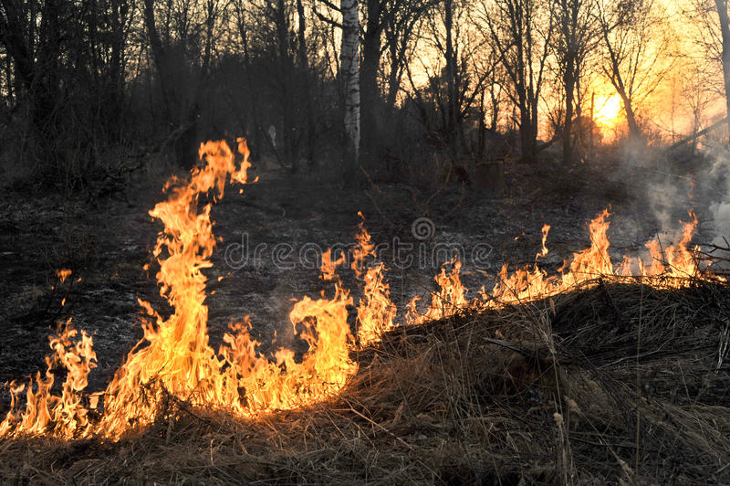 Bushfire stock images