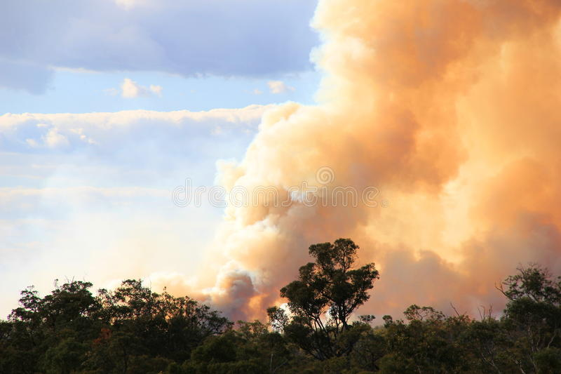 bushfire imagen de archivo libre de regalías