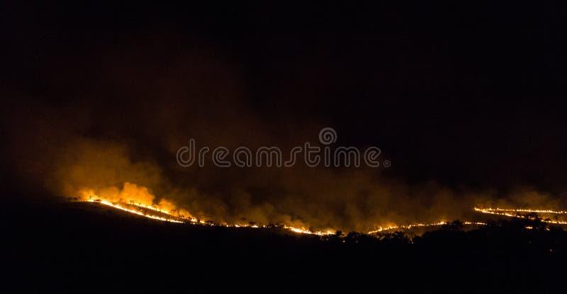 bushfire australiano de un la m?s forrest en la noche en el Territorio del Norte imagen de archivo libre de regalías