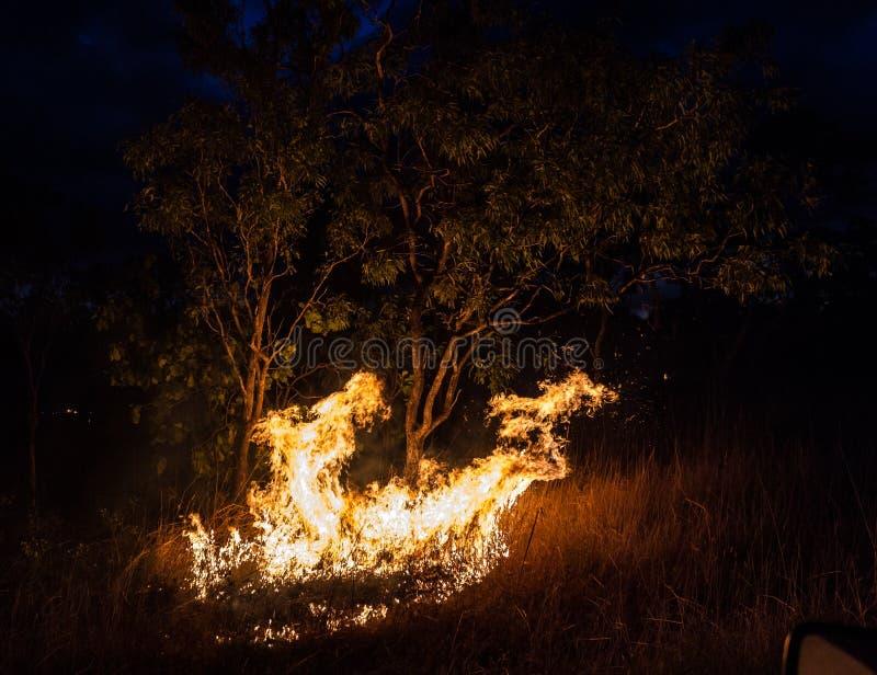 bushfire australiano en la noche al lado de un árbol en el Territorio del Norte imagenes de archivo