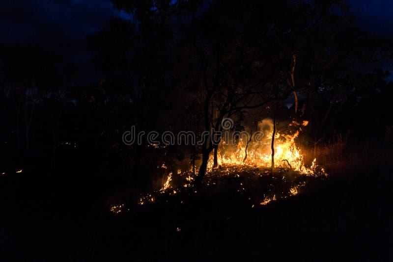bushfire australiano en la noche al lado de un ?rbol en el Territorio del Norte imágenes de archivo libres de regalías