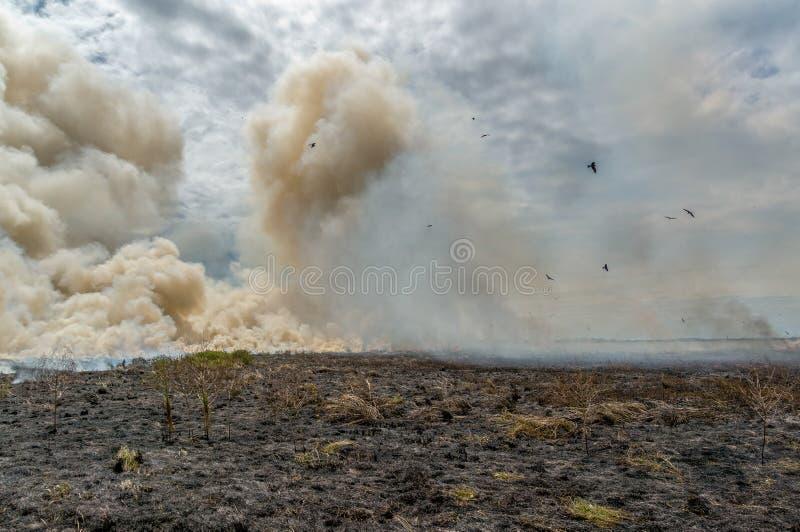 Bushfire controlado en el parque nacional de Kakadu, con diversos pájaros, Territorio del Norte, Australia fotos de archivo