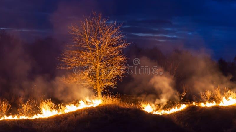 Bushfire en la noche fotos de archivo