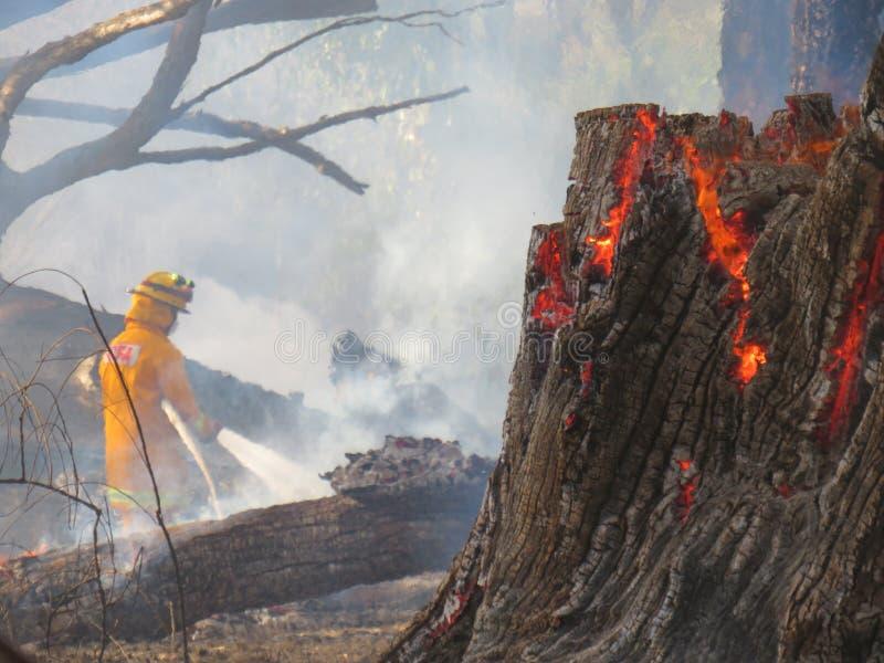 bushfire imagen de archivo
