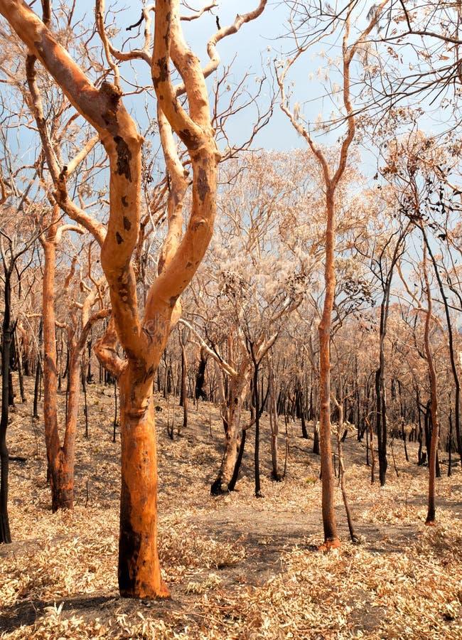 Bushfireefterdyning royaltyfria bilder