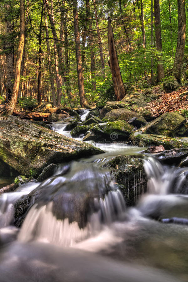 Download Bushkill Creek stock image. Image of hiking, woods, foliage - 20507965