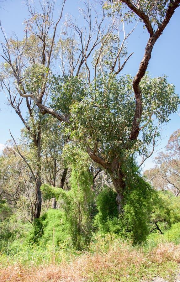 Bushland coberto de vegetação fotografia de stock