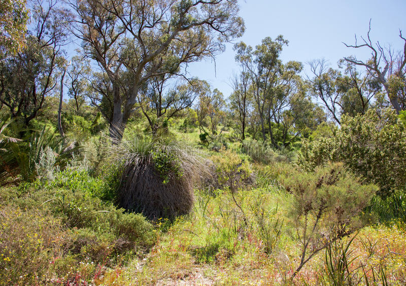 Bushland gramíneo imagem de stock