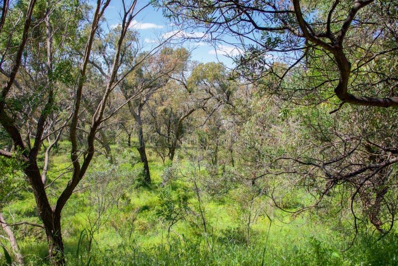 Bushland litoral nativo foto de stock royalty free