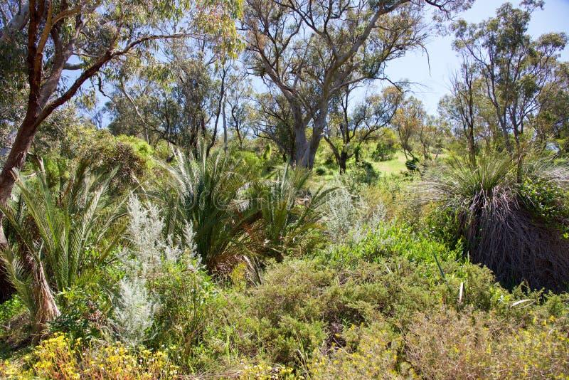 Bushland tropical no parque corajoso imagem de stock