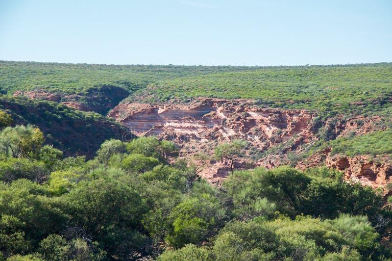 Bushland: Z-загиб, национальный парк Kalbarri стоковое фото rf