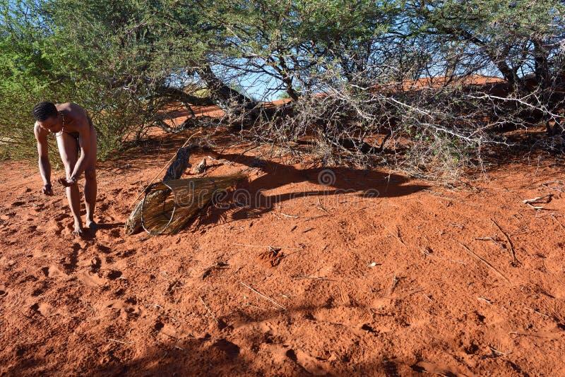Bushman hunter Kalahari desert, Namibia. KALAHARI, NAMIBIA - JAN 24, 2016: Bushman hunter checks a trap for the porcupine. San people, also known as Bushmen are royalty free stock image