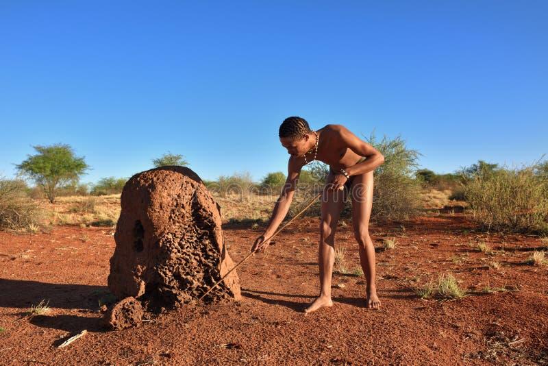 Bushman hunter, Kalahari desert, Namibia. KALAHARI, NAMIBIA - JAN 24, 2016: Bushman hunter near termite mound. The San people, also known as Bushmen are members royalty free stock photo