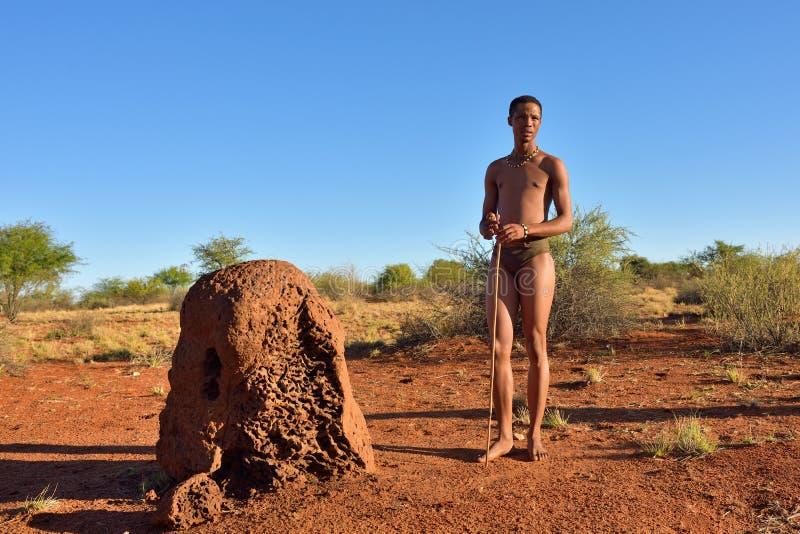 Bushman hunter, Kalahari desert, Namibia. KALAHARI, NAMIBIA - JAN 24, 2016: Bushman hunter near termite mound. The San people, also known as Bushmen are members royalty free stock image