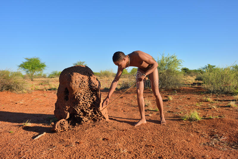 Bushman hunter, Kalahari desert, Namibia. KALAHARI, NAMIBIA - JAN 24, 2016: Bushman hunter near termite mound. The San people, also known as Bushmen are members stock images