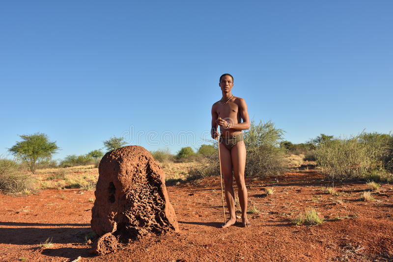 Bushman hunter, Kalahari desert, Namibia. KALAHARI, NAMIBIA - JAN 24, 2016: Bushman hunter near termite mound. The San people, also known as Bushmen are members stock image