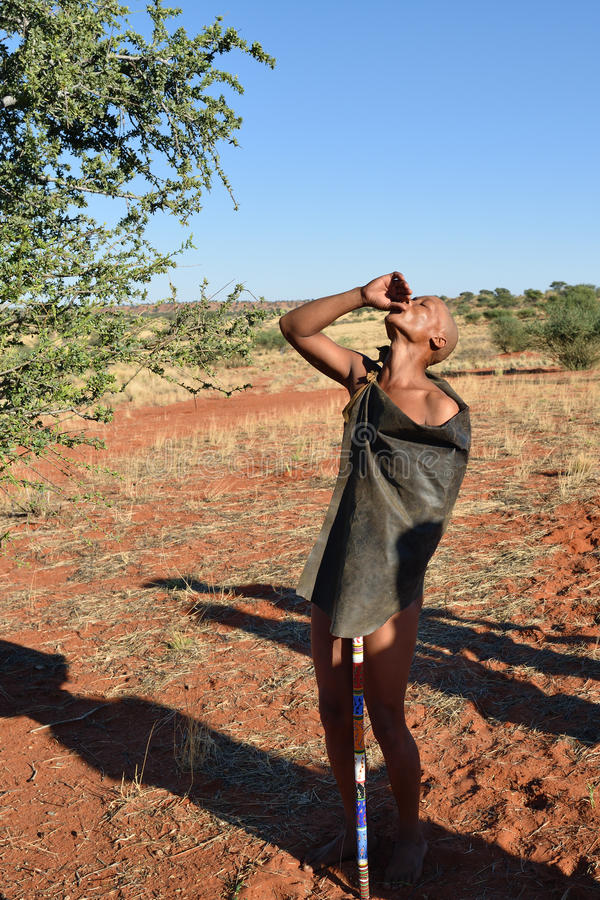 Bushman hunter in the Kalahari desert, Namibia. KALAHARI, NAMIBIA - JAN 24, 2016: Bushman hunter is screaming in the Kalahari desert. San people, also known as stock photo