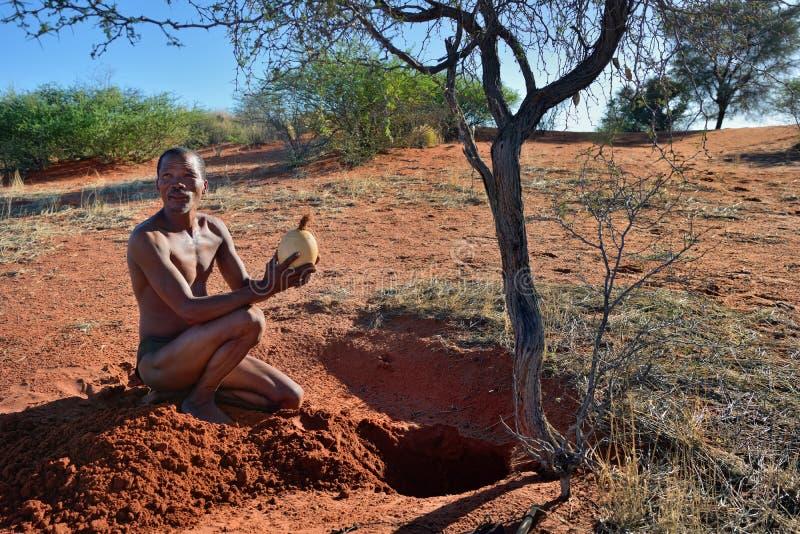 Bushmen hunter in the Kalahari desert, Namibia. KALAHARI, NAMIBIA - JAN 24, 2016: Bushmen hunter takes an ostrich egg with water. San people, also known as royalty free stock photos