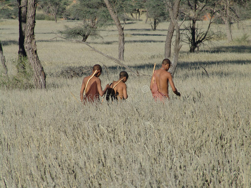 Bushmen hunters in a fields search stock image